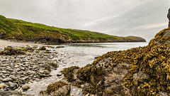 Porthsychan Beach (Keith in Exeter) Tags: porthsychan beach pembrokeshire coast nationalpark strumblehead fishguard wales rock kelp seaweed plant pebble sea bay cove headland landscape water cliff bracken tranquil