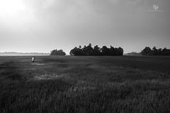 The Solitary Reaper (Navaneeth Kishor) Tags: farm farming farmer paddy paddyfield rice ricefarm kerala keralam kuttanad alappuzha alleppey woman women ladyfarmer life bnw blackandwhite monochrome minimalism minimalist