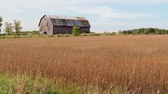 Wisconsin Barn (PDX Flyer) Tags: wisconsin field grass building sky cloud clouds america usa americana rural tree barn