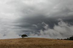 November mood (Jakob Arnholtz) Tags: arnholtz odsherred denmark rain storm clouds bad skyer gråvejr regnvejr danmark natur nature