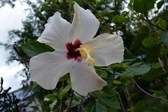WOL Calauan Laguna Philippines Day 7 (201) (Beadmanhere) Tags: philippines flowers