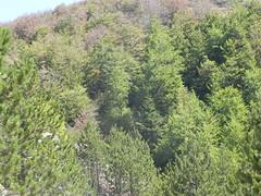 DSCN9565 (Gianluigi Roda / Photographer) Tags: apennines latesummer 2012 mountains geologicalevidences rocks trees woods landscapes