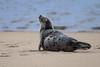 (Fifinator) Tags: seal harbor cape cod basking sun