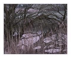 River Arun (Sean D H Lewis) Tags: river arun sussex reeds houghton southdowns sunrise