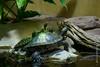 DSC_0177 (kubek013) Tags: stuttgart germany niemcy deutschland wycieczka wanderung trip sightseeing besichtigung stadt city citytour stadtrundfahrt zwiedzanie zoo wilhelma