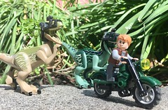 Owen and His Velociraptors in Mesa Courts (westhl) Tags: jurassic world owen grady lego legos chris pratt park minifigure minifigures minifig toy toys photography photo photos