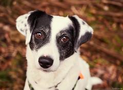 2/52 Oh no (frau_k) Tags: 52weeksfordogs 02 52 buba k 52weeks dog outdoor siebengebirge