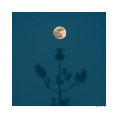 Luna Llena (david Ramalleira) Tags: davidramalleira davidramalleiraphotography d700 nikon nature naturaleza natureart naturephotography naturesfinest naturesart natura landscape landscapes paisaje paisajes moon luna lunallena fullmoon