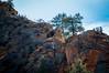 Angels Top (twinblade_sakai340) Tags: adventure angel fun hike hiker hiking landing landscape mountain mountains national nature outdoor outdoors park slot utah wall zion