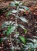 New start in life!😀👍😀 (LeanneHall3 :-)) Tags: newshoots newstart plant leaves green soil eastpark hull kingstonuponhull closeup closeupphotography samsung galaxys7edge