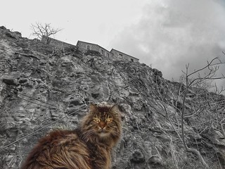 the guard of the castle.