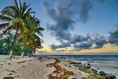 On the beaches of Playa del Carmen (viktoria.czire) Tags: mexico beach caribbean sand nature cloud clouds sky landscape photography nikond5300 nikon iamnikon sunset palmtrees