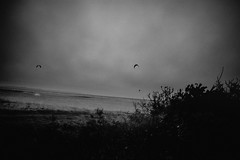 Up and Down... (l1ze) Tags: leicam danmark sanddobberne leica denmark sjælland zealand 28mm leicam9p odsherred dk elmaritm f28 asph wind surfing kitesurfing
