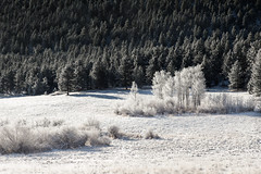 Frosted (Kevin Dinkel) Tags: landscape winter serene crisp frost outdoor pines snow trees outside forest photography colorado dinkelphoto beautiful calm cold