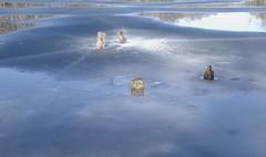january thaw #2 (larrynunziato) Tags: natureabstract abstractphotography meltingice januarythaw creativephotography
