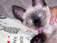 gato folgado. (odineiferreira) Tags: cat chat 猫 قط