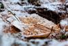 Ein Hauch von Winter (malp007) Tags: blatt macro nature blickwinkel naturephotography snow schnee eis winter structure object