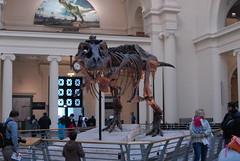 Field Museum (john.watne) Tags: fieldmuseum museum sciencemuseum chicago dinosaur
