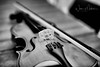 A beautiful instrument (w.mekwi photography [here & there]) Tags: blackandwhite violin 50mmf14 dof wmekwiphotography curves bow niftyfifty instrument closeup nikond800 strings