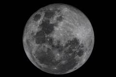 Súper Luna (José M. Arboleda) Tags: astronomía bluemoon super luna cielo noche popayán colombia canon eos 5d markiv meade 2120b focalreducerfieldflattener jose arboleda josémarboledac