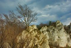 319  I grow on a rocky ground - Wspinacz (Hejma (+/- 5400 faves and 1,7 milion views)) Tags: skały wapienne drzewa krzewy lasy ciemne chmury