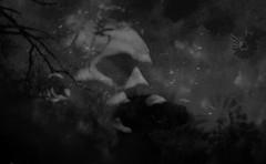 [ .   king of birds   . ] (ǝlɐǝq ˙M ʍǝɥʇʇɐW) Tags: newton aphorism thoreau whereilivedandwhatilivedfor singersingmeasong singersingmeagiven mykingdomforavoice iamthekingofallisee novel wharton birdy drseuss aesop stipe lyrics music variations redux windmills tilting texas icouldliveamillionyears 你想一了百了,請不要這樣 當你覺得快崩潰時,你要撐住 夜晚來臨,又是你一個人面對黑暗 白天好不容易結束 ahundredmillionbirdsfly standingontheshouldersofgiantsleavesmecold childrencarryreservations 英语 年的专辑 是一支于 interplanetaryandinterstellarconcentrationsofmatter thesolarcorona ashenlight earthlitportionsofthemoon f12 insomnia rem musiclyrics athumbnailsketchajewelersstone pointtopointpointobservation stars space zodiacallight nasa experiment nikon35mm apollo17 blackandwhite bw multipleexposure film screenshot michaelstipe