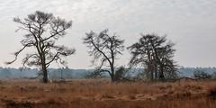_Z1A3318 (doevos) Tags: gelderland hogeveluwe npdhv nationaalparkdehogeveluwe veluwe wandelfit