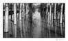 Les caprices du Serein (Rémi Marchand) Tags: eau inondation montréal yonne leserein serein rivière canon5dmarkiii noiretblanc blackandwhite monochrome reflet arbre crue