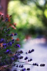 Colors from a summer (Stefano Rugolo) Tags: stefanorugolo pentax k5 pentaxk5 bokeh garden depthoffield colors building flowers italy lazio vintagelens summer