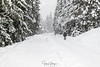 Winterwonderland, walking in the snowstorm (Henk Verheyen) Tags: a austria flachau oostenrijk wintersport cold landscape landschap sneeuw snow white gemeindeflachau salzburg at