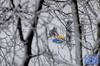 A view from the room (Erwin van Maanen.) Tags: streetphotography straatfotografie urban storytelling netherlands nederland paisesbajos aviewfromtheroom documentaire verhalendefotografie narrativephotography socialdocumentary erwinvanmaanen kroonenvanmaanenfotografie nikond7000 sneeuw snow nieve