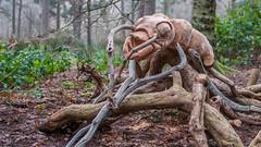 Rushmere Park Walk - January 13th 2018 (Trackside70) Tags: rushmerepark leightonbuzzard bedfordshire england uk winter walk scenery park dog woodland trees january 2018 garywalton nikond300s nikkor35mmf18 carving bug ant wooden art
