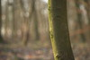 In the Forest (Stefan Zwi.) Tags: forest wald moos moss tree baum bokeh light licht