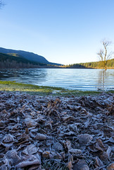 Frosty Beach at Rattlesnake Lake (s.d.sea) Tags: rattlesnake lake winter frost chilly frozen morning beach wide angle cold pentax k5iis 15mm leaves sun sunny sunshine blue sky water landscape nature pnw pacificnorthwest washington washingtonstate north bend