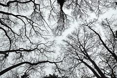 istanbul, day 4 (kaneko_ryo) Tags: eos5dmarkⅳ ef2470mmf28liiusm turkey istanbul trees tree