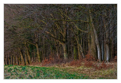 At the edge of the forest (bavare51) Tags: rügen buchenwald waldrand bäume eichen holz