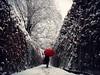 T H E  R E D  U M B R E L L A (Vivi Black) Tags: germany dontlookbehind natureandhuman cold season ways outside outdoor redumbrella winter snow
