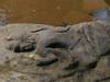 P1240356.jpg (vickydoc) Tags: lingas rivièrekbalspean cascade siemreap rivièreauxmillelingas cambodia angkor cambodge vishnou banteaysrei siemreapprovince kh