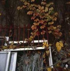 Still life (dsinlic2) Tags: fog fallcolor longislandcity ny