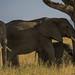 2017.06.22.5129 Elephants