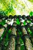 Arboles surrealistas (julien.ginefri) Tags: mexico méxico america latinamerica edwardjames laspozas xilitla huasteca potosina jungle selva surrealism jardinsurrealista sanluispotosí