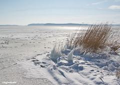 Winterimpression am Bodden (garzer06) Tags: schnee eis semper deutschland frost schilf mecklenburgvorpommern naturfoto bodden himmel naturphoto inselrügen naturphotography insel naturfotografie rügen