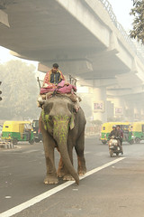 An elephant in the street of Delhi (n1ck fr0st) Tags: india trip indian dehli street rider rickshaw metro overpass subway