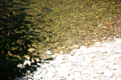 IMG_1113 (comtrag) Tags: flumegorgenh flumegorge nh newhampshire lincolnnh
