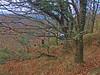 Recording wind chimes (6 sets) in copse by Hunter's Path, Teign Gorge (Philip_Goddard) Tags: europe unitedkingdom britain british britishisles greatbritain uk england southwestengland devon dartmoornationalpark drewsteignton teignvalley teigngorge hunterspath views scenery landscapes woodland wood valley hill windchimes recording winter