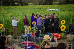 cherriehughesphotographer-0305 (bilateral) Tags: sunsetsymphonyinthesunflowers sunflowers sugarcane celebration music orchestra sakwolo assi australiansouthseaislander agriculture concert farm simonmattsson sugarvsthereef