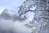 il silenzio dei pinguini (art & mountains) Tags: alpi alps formazza antigorio ossola pomat eschental bosco alberi nevicata white ghiaccio ice snowshoes hiking esc esp condivisione nuvole nebbie atmosfera freddo natura silenzio contemplazione scultura vision dream spirit armonia