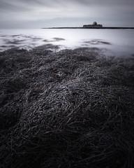 Solace (jellyfire) Tags: church distagont3518 landscape landscapephotography longexposure seaweed sonnartfe55mmf18za sony sonya7r sonyfe70200mmf40goss stcwyfans winter ze zeissdistagont18mmf35ze kelp leeacaster snowdonia wales wwwleeacastercom zeiss