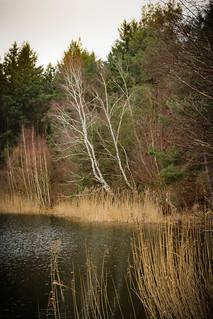 Waldsee4