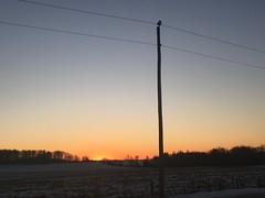 Snowy at Sunset (Linda Ramsey) Tags: dusk sky sunset nature winter ontario february snowyowl